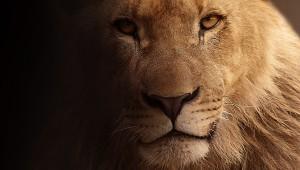 lion-617365