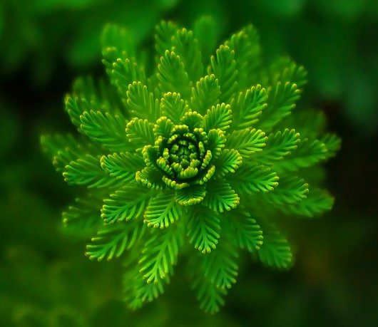 water-plant-821293